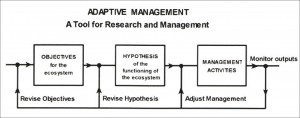 adaptive-management