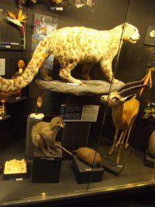 cardff-museum
